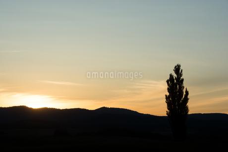 夕暮れの空とポプラ 美瑛町の写真素材 [FYI02989778]