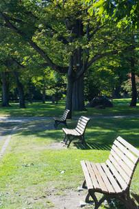 公園のベンチの写真素材 [FYI02989782]