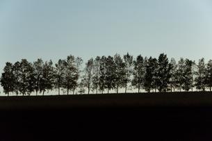 夕暮の丘とシラカバ並木 美瑛町の写真素材 [FYI02989802]