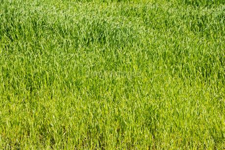 緑の草原の写真素材 [FYI02989803]