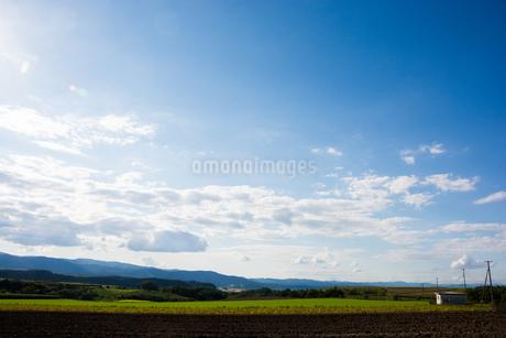 緑の畑作地帯と青空の写真素材 [FYI02989804]