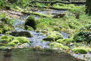 山奥の渓流の写真素材 [FYI02989806]