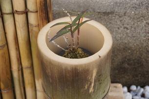 盆栽の写真素材 [FYI02989822]