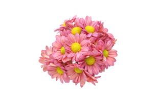 菊の花束の写真素材 [FYI02989901]