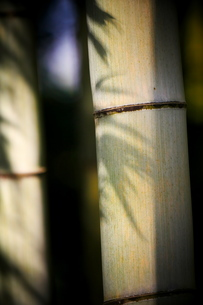 竹の幹と笹の陰の写真素材 [FYI02990320]