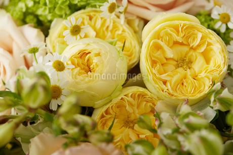 春の花束の写真素材 [FYI02990379]