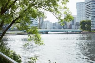 川辺の緑と橋の写真素材 [FYI02990440]