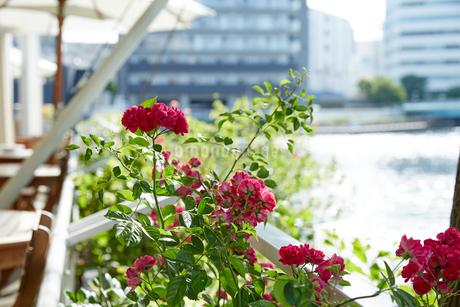 水辺の赤い花の写真素材 [FYI02990441]
