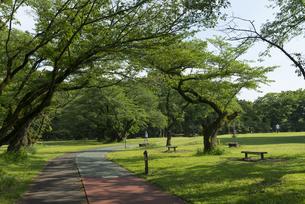 所沢航空記念公園の風景の写真素材 [FYI02990478]