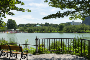 上野公園の不忍の池の風景の写真素材 [FYI02990482]