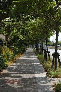 歩道に街路樹の木漏れ日が続くの写真素材 [FYI02990668]