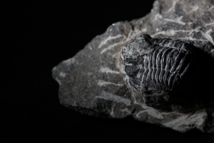 化石の写真素材 [FYI02990717]