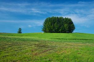 もうひとつのマイルドセブンの丘の写真素材 [FYI02990753]