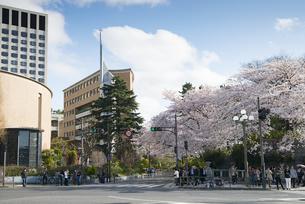 四谷駅前の桜の写真素材 [FYI02990847]