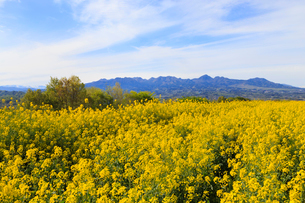 鼻高展望花の丘の写真素材 [FYI02990856]