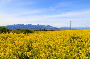 鼻高展望花の丘の写真素材 [FYI02990863]
