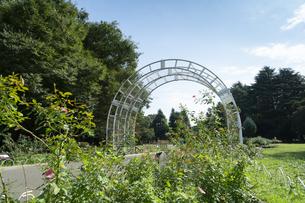 代々木公園の風景の写真素材 [FYI02990887]