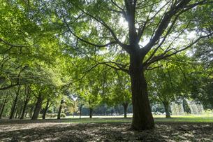 代々木公園の風景の写真素材 [FYI02990890]