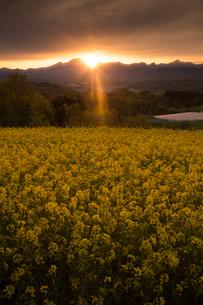 鼻高展望花の丘の夕日の写真素材 [FYI02990904]