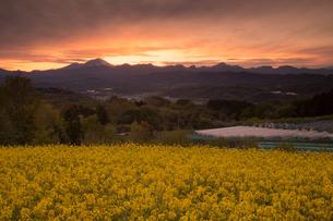 鼻高展望花の丘の夕日の写真素材 [FYI02990910]