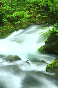 新緑眩しい奥入瀬の地の写真素材 [FYI02990939]
