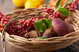 秋の野山で採れた果実たちの写真素材 [FYI02990943]