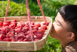 干しているしそ梅の香りを嗅ぐ子どもの写真素材 [FYI02990996]