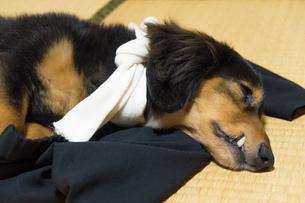 ペットの体調管理の写真素材 [FYI02991023]