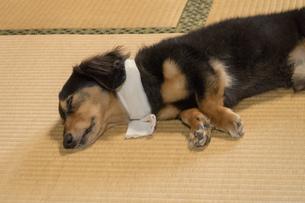 ペットの体調管理の写真素材 [FYI02991025]