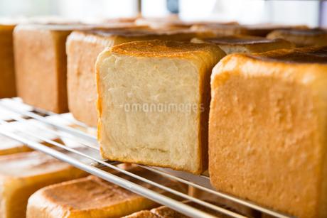 焼きたての食パンの写真素材 [FYI02991244]
