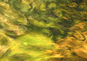 まばゆい渓流の水世界の写真素材 [FYI02991247]