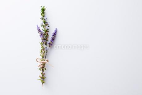 ローズマリーの花の写真素材 [FYI02991267]