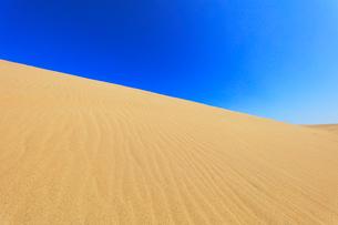 砂丘と快晴の空の写真素材 [FYI02991279]
