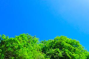 快晴の空に新緑の木立の写真素材 [FYI02991384]