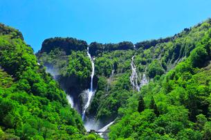 称名峡谷 新緑にハンノキ滝と快晴の空の写真素材 [FYI02991389]