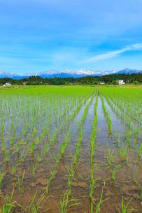富山平野の水田と立山連峰の写真素材 [FYI02991413]