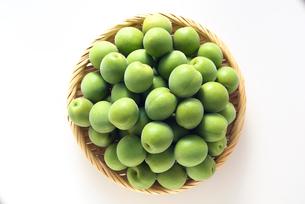 梅の実の写真素材 [FYI02991595]