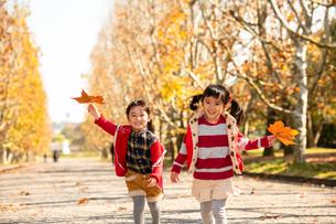 秋の公園で遊ぶ子供の写真素材 [FYI02991848]