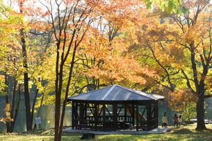 秋の公園 富良野市の写真素材 [FYI02991856]