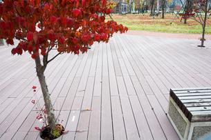 赤く色づいた木の写真素材 [FYI02991870]