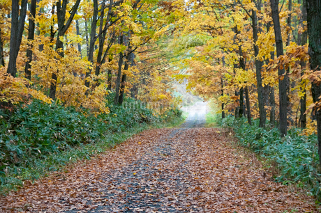 秋の山道の写真素材 [FYI02991875]