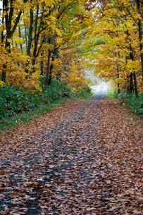 秋の山道の写真素材 [FYI02991876]