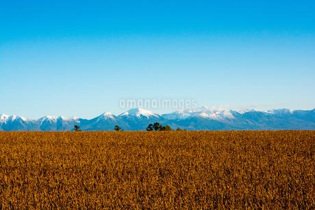 秋の大豆畑と冠雪の山並み 十勝岳連峰の写真素材 [FYI02991877]