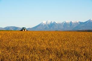秋の大豆畑と冠雪の山並み 十勝岳連峰の写真素材 [FYI02991878]