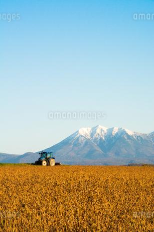 秋の大豆畑と冠雪の山並み 十勝岳連峰の写真素材 [FYI02991879]