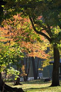 秋の公園 富良野市の写真素材 [FYI02991883]