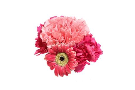 ガーベラとカーネーションの花束の写真素材 [FYI02991926]