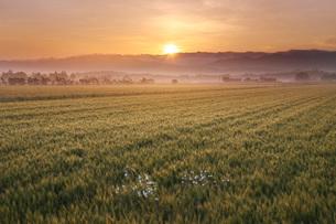 麦畑と日の出の写真素材 [FYI02992005]