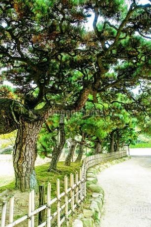 栗林公園の美しい松の枝ぶりの写真素材 [FYI02992122]