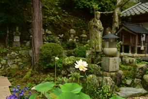 蓮の花と石仏の写真素材 [FYI02992389]
